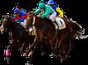 horse - ĐUA NGỰA