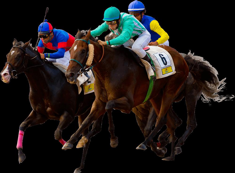 horse - Horse Racing